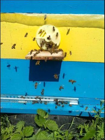 Пчелы. Отводки. Пчелопакеты