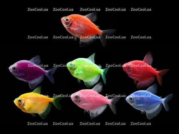 Купить аквариумных рыбок в Киеве! Зоомагазин, продажа рыб, рыбки