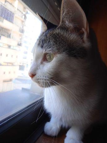 Ajuda para Adoção gato responsável