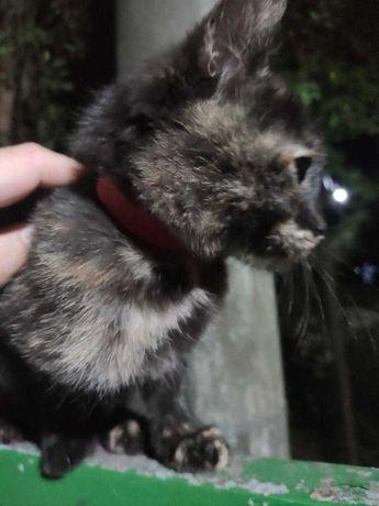 4-х місячне кошеня шукає дім(хлопчик)