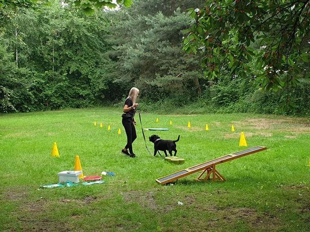 Szkolenie psów POZNAŃ