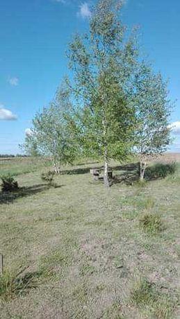 Sprzedam działkę rolną o powierzchni 43,93 ary w miejscowości Różnowo