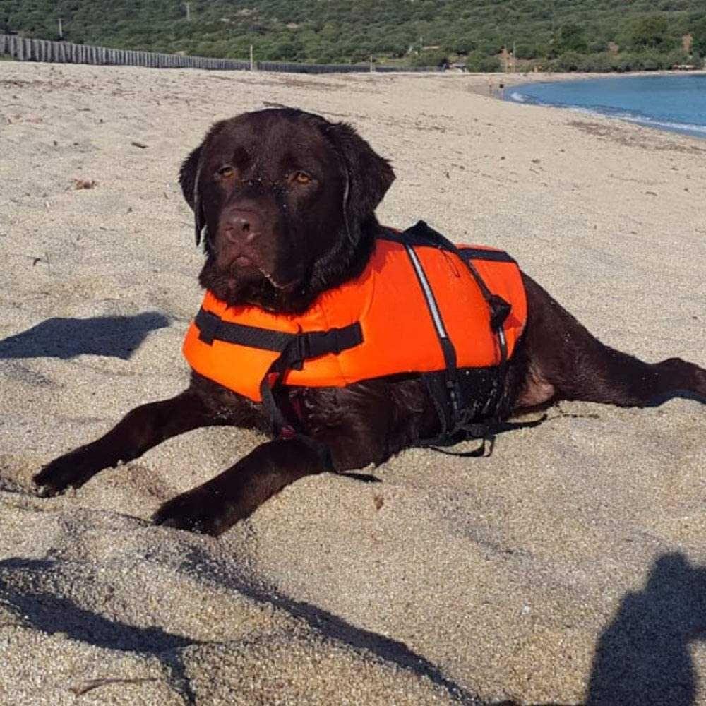 Colete Salva-Vida, boia para cão CROCI - NOVO
