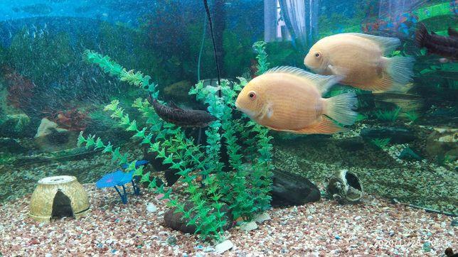 Продам акваріум кутовий