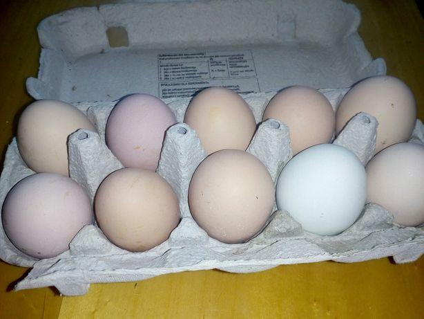 Świeże wiejskiej jajka