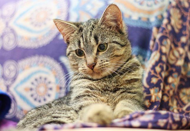 Lusia, kotka o unikatowym charakterze