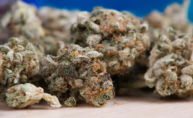 Susz CBD Premium 3 gramy odbiór 24h/7