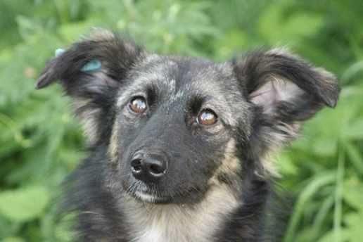 Красивая пушистая Мила, маленькая собака в добрые руки, стерилизована
