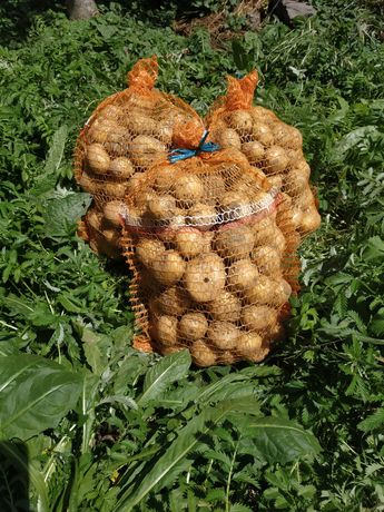 Ziemniaki GALA na samym oborniku, cebula, czosnek, seler, por :)
