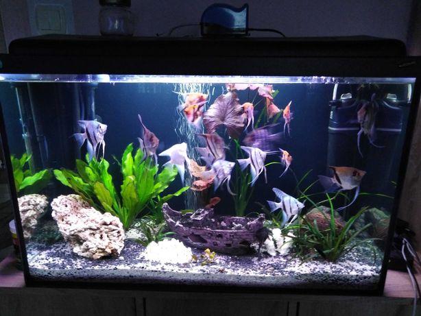 Akwarium 160l