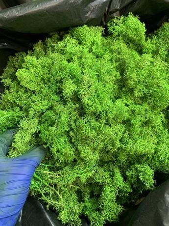 Стабилизированный мох без верхушек