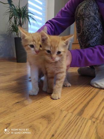 Oddam male kotki w dobre ręce
