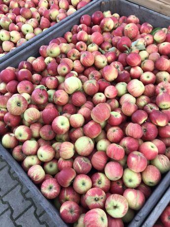 Jablka Idaret oraz Ligol Hurt ładne i duże