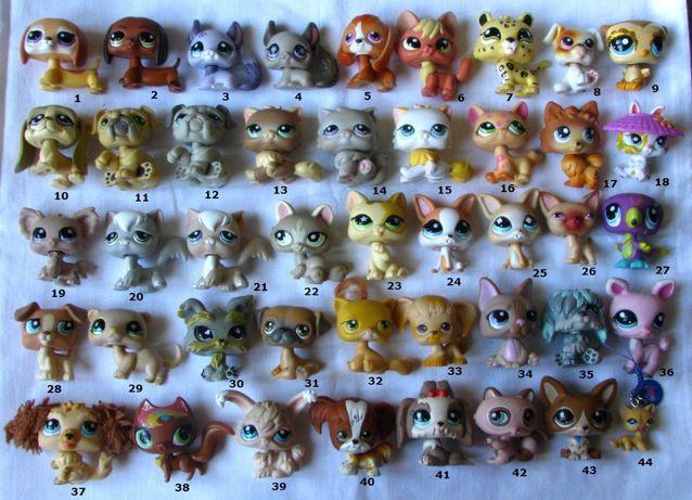 Pet Shop shorthair jamnik kotek beagle shorthair LPS lis pomeranian