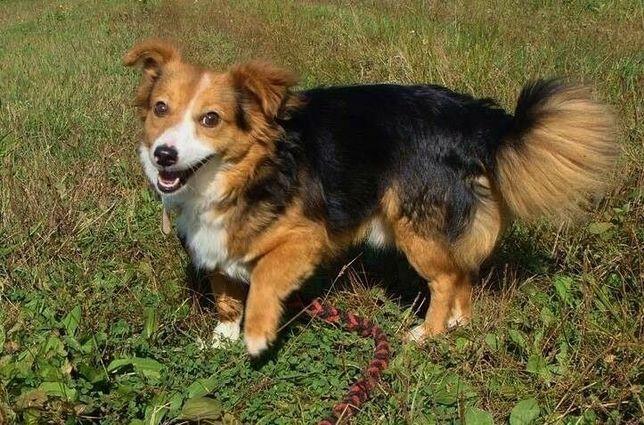 LUCKY cudowny psiak po przejściach wyczekuje kochającego domku