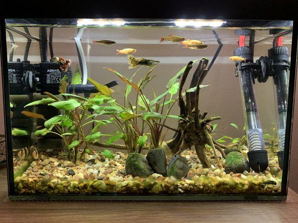 Akwarium 20 litrów wraz z życiem