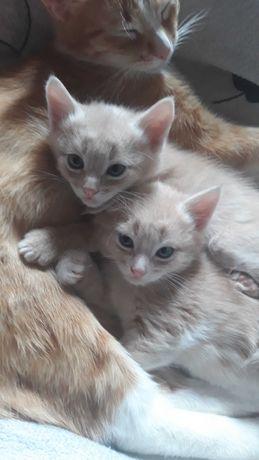 Отдам котёнка (2 месяца)