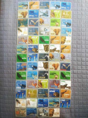 Karty Mr Snaki Zwierzęta szybkie i najszybsze/Szkielety - 65 kart