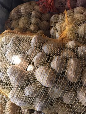 Ziemniak kalibrowany