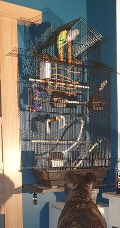 Papugi z klatka i jedzeniem na rok