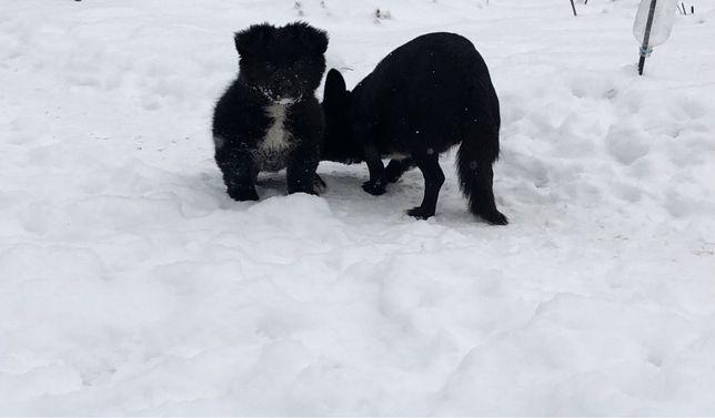 Симпатичные собачки для двора или дома