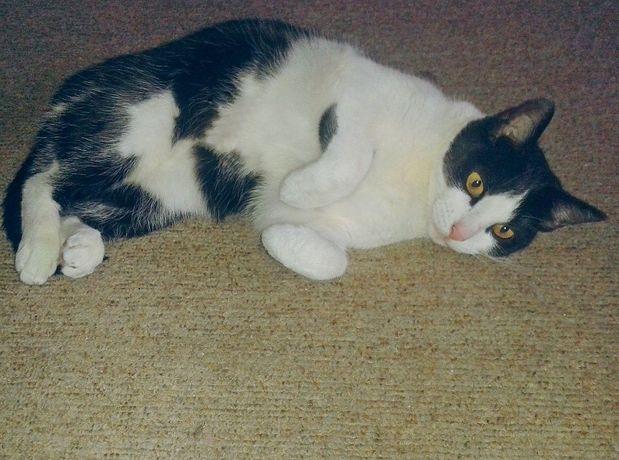 Agusia - piękna, spokojna, młoda kotka prosi o adopcję