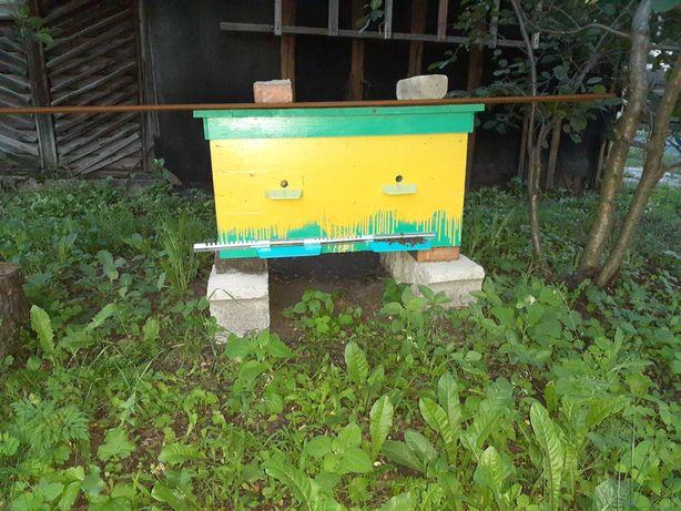 Пчелы,улики      .