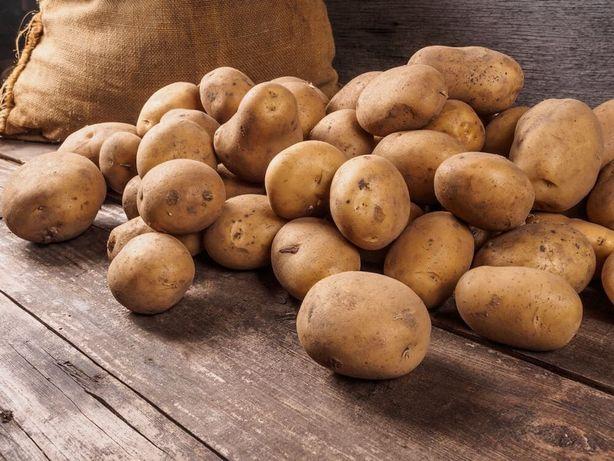 Ziemniaki Jadalne. Satina, Vineta