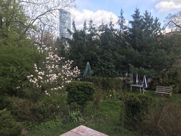 Dwa duże połączone pokoje, sypialnia + dzienny. Parter ogród Sky Tower