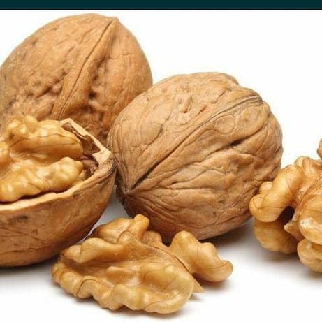 Однолетние саженцы ореха