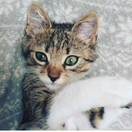 Котёнок Бендер ищет любящих родителей!