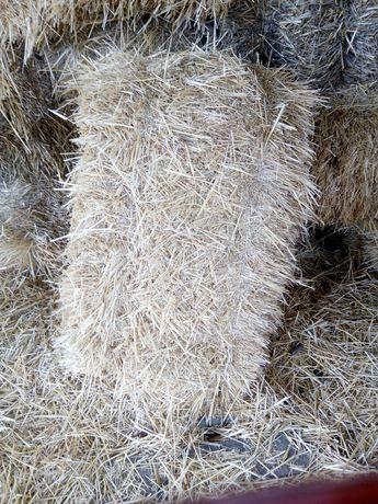 Продам пшеничную солому 50 руб.