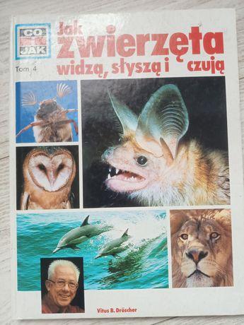 Książka edukacyjna dla dzieci