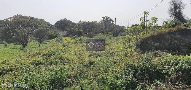 Vende-se terreno rústico Picota - Monchique