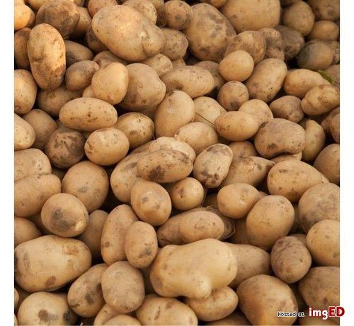 Ziemniaki kartofle prost od rolnika Wineta Gala