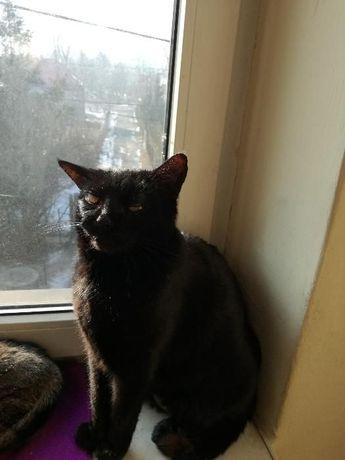 Zaginął czarny kot kocur Mikuszowice Bielsko-Biała