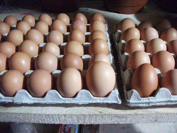 Jaja kurze wiejskie, z wolnego chowu