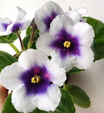 Комнатные растения недорого