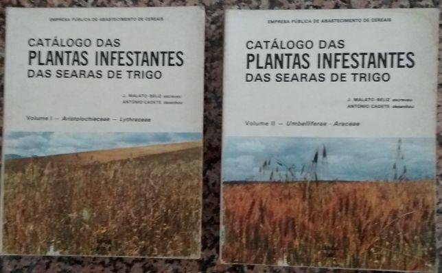 Catálogo das plantas infestantes das searas de trigo / J. Malato-Beliz