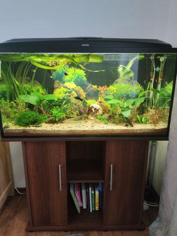 Zestaw akwarium z życiem