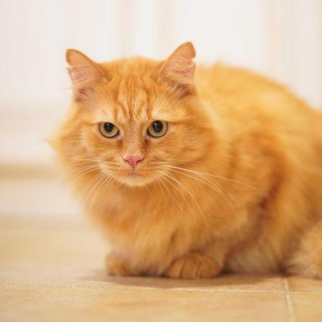 Няш-Мяш котик наш 1 рік