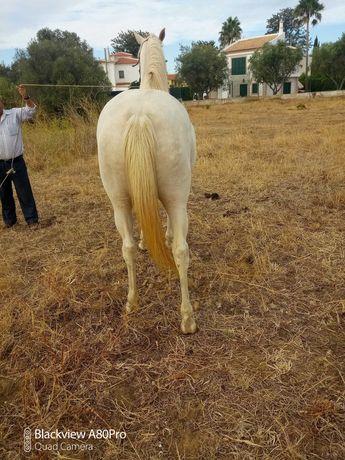 Égua muito bonita