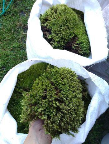 Лісовий мох для утілок, ягель сфагнум