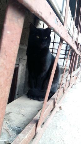 Шукає родину котик