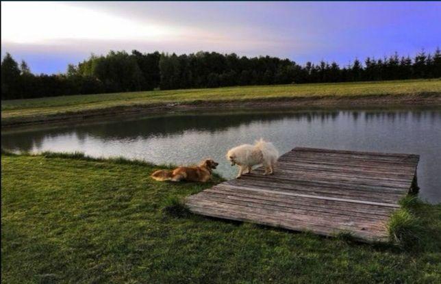 Opieka nad psem, hotel dla psów!