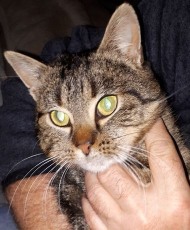 Filigranowa Maja czeka na dom, przyjacielska, piękna i łagodna kotka