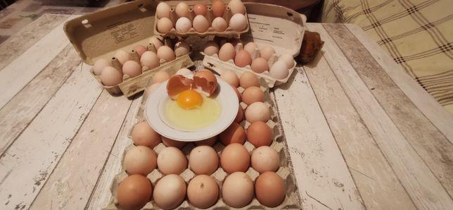 Jajka wiejskie , swojskie z wolnego wybiegu od Rolnika