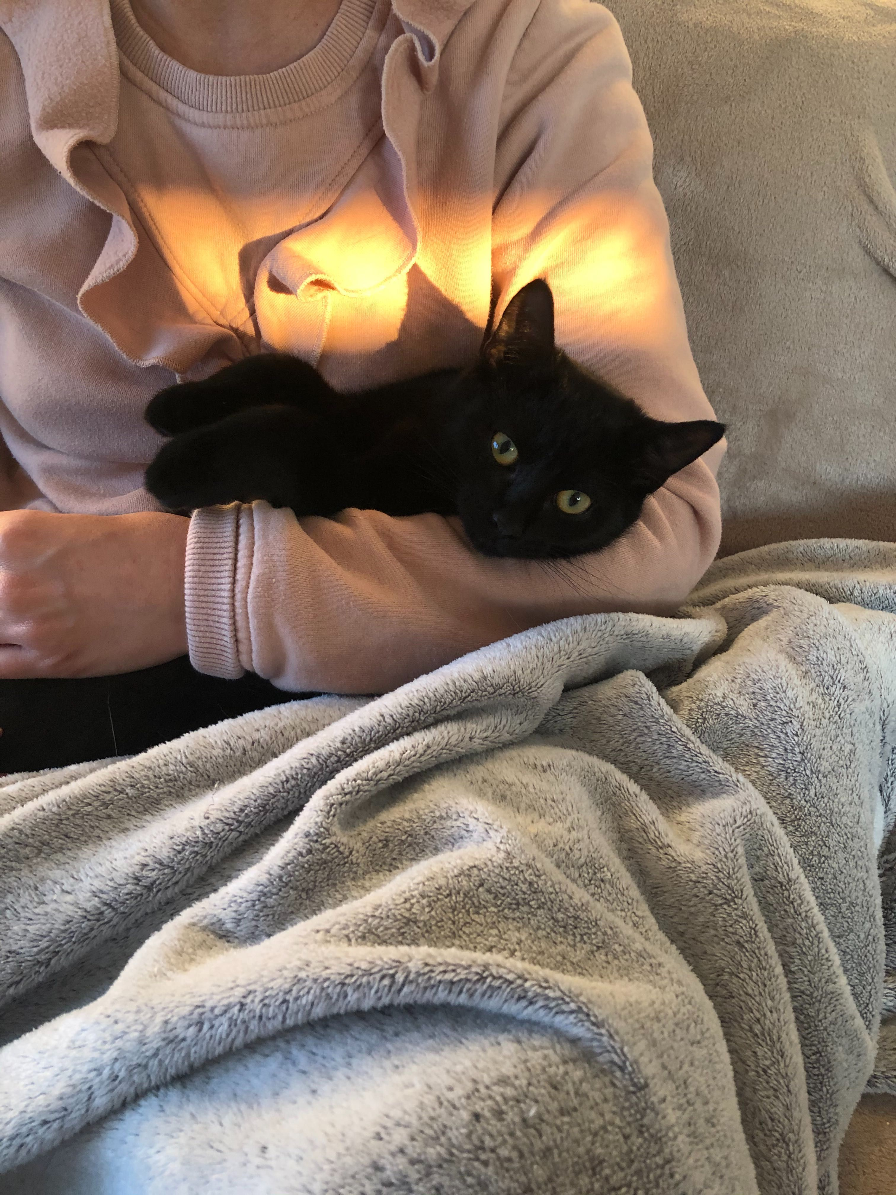 Figusia 4 mieś kocia przytulanka szuka domu. Mała kotka do adopcji.