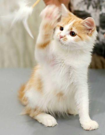 Добрые и любящие ручки отдается красотка-котенок Киса (3-4 месяца)