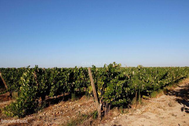 Prédio Rústico Com 6 Ha De Vinha Localizado Na Zona Colonizada Da Herd